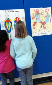 Students have to locate quadriceps and show a partner one exercise to strengthen their quadricep.